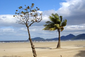 brazil beach wind 300x200 W&W4