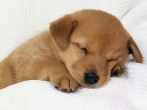 cute dog2 300x225 ORGANIC