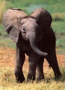 elephant 217x300 Ecotourism