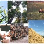 biomass energy 150x150 BIO3