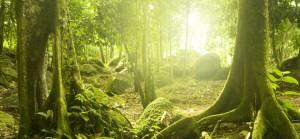 forestfactshome 300x139 Envir4