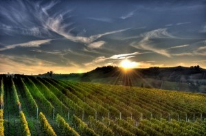 Sunset over Vineyard 300x198 Kendall Jackson Winery Has A Taste For Solar Power